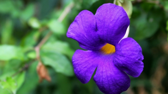 Violet Flower February Flower Of The Month